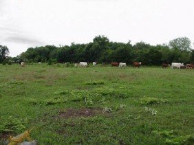 GOV: TX LAND, 40 AC. $24,900@$249/mo LOVING COUNTY!