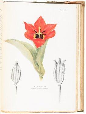 Notes On Tulip Species With Color Plates