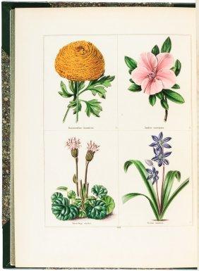 Maund's Botanic Garden 312 Colored Botanical Plates