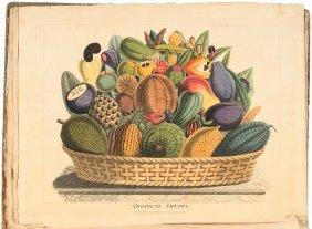 Titford's Botanicus Americanus 1811
