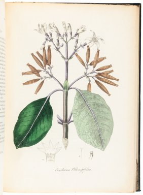 Woodville's Medical Botany Volume 5 1832