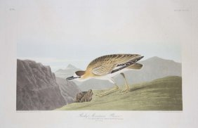 John James Audubon, Plate 350: Rocky Mountain Plover