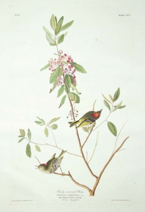 John James Audubon, Plate 195: Ruby Crowned Wren