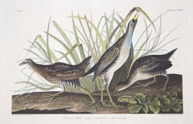 John James Audubon, Plate 233: Sora Or Rail