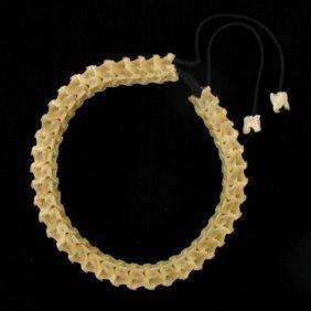 615ct Scarce Cobra Bone Choker Necklace