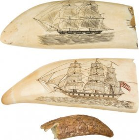 Lot Of Three Scrimshawed Whale Teeth.