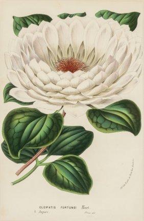 Horto Van Houtteano (belgian, 19th Century) Trop