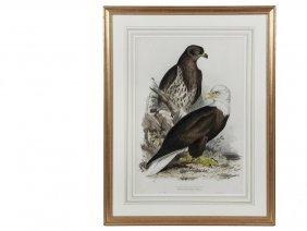 "Edward Lear (uk, 1812-1888) - ""white Headed Eagle"