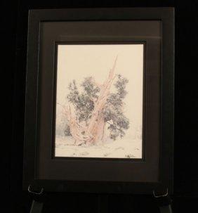 """Winter Tree"", California Vintage Signed Original ED572"